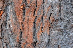 Beautiful natural texture of bark wood plank use as nature wooden textured. Background or backdrop stock photo