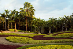 Beautiful natural tropical garden Royalty Free Stock Images