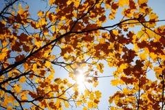 Beautiful Nature Stock Photography