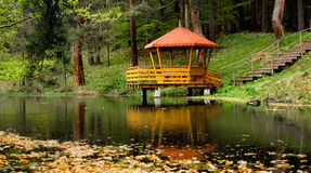Beautiful nature. Beaudiful nature landscape; lake in the forest Stock Image
