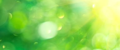 Beautiful nature abstract blurred background. Green bokeh backdrop. Summer or spring background with sun flares. Wide screen stock image