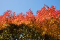 Beautiful nature at Arashiyama in autumn season in Kyoto, Japan. Arashiyama is a one of attraction landmark for tourist in Kyoto Royalty Free Stock Images