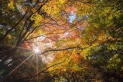 Beautiful nature at Arashiyama in autumn season in Kyoto, Japan. Arashiyama is a one of attraction landmark for tourist in Kyoto Stock Images