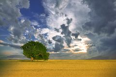 Beautiful Nature.Art Photography.Creative Background.Colorful Summer Landscape.Blue Sky,clouds.Panorama,tree.Summertime,sunset. Stock Photos