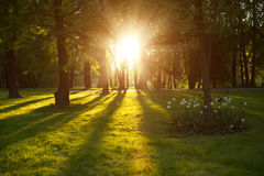 Beautiful Nature At Evening In Spring Forest, Trees With Sun Ray Stock Images