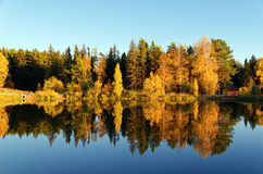 Autumn forest and lake in the fall season Stock Image