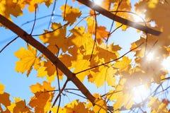 Beautiful nature - autumn Royalty Free Stock Image