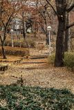 Beautiful nature in the autumn park. University campus in Seoul. Vertical stock photo