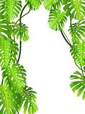 Beautiful Nature Background Royalty Free Stock Images