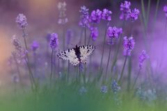 Free Beautiful Nature Background.Abstract Wallpaper.Celebration.Artistic Spring Flowers.Art Design.Green Color.Summer,love.Butterfly. Stock Photo - 183462290
