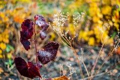 Beautiful nature background Royalty Free Stock Photo