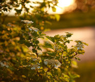 Beautiful nature background blossoming flowers on sunset Royalty Free Stock Photos