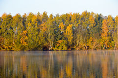 Beautiful nature background with calm waters. Beautiful nature background in autumn theme with calm lake water reflecting yellow and green deciduous trees and Royalty Free Stock Photo