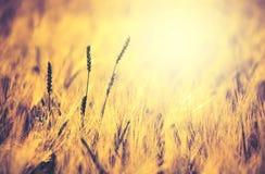 Beautiful nature background Stock Photos