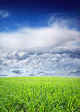 A beautiful nature background with sky and grass. A beautiful sunny nature background with deep blue sky, white clouds and green grass Stock Photos