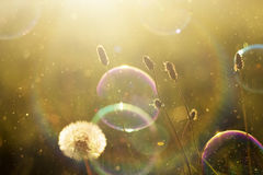 Beautiful nature background with soap bubbles stock photo