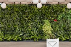 Beautiful nature background of vertical garden with tropical green planting leafs with flower square wooden pot. Beautiful nature background of vertical garden stock images