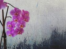 Infinite Purity. Beautiful Nature Balance Royalty Free Stock Images