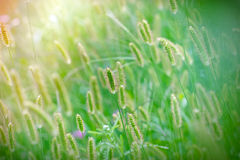 Beautiful nature - Beautiful field of grass Stock Photo