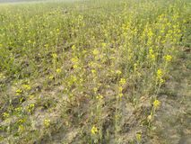 Beautiful nature. Beautifulnature sarsokakhet agriculture royalty free stock photography