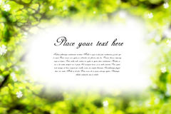 Beautiful nature blurred background. Green blurred background with place for your text stock images