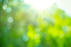 Beautiful nature blurred background. Green bokeh royalty free stock images