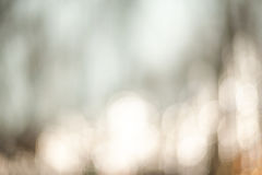 Beautiful Nature blurred light abstract background - Natural out Stock Image