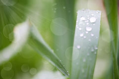 Beautiful Nature Bokeh.Blurred background. Grass. Fresh green spring grass with dew drops closeup. Sun. Soft Focus. Abstract Nature Background Stock Image