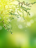 Beautiful Nature Bokeh. EPS 10 Stock Photography