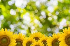 Beautiful Nature Bokeh Royalty Free Stock Photography