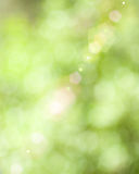Beautiful Nature Boken Stock Image