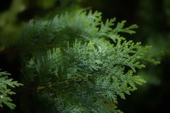 Beautiful nature close-up in the garden green color Royalty Free Stock Photo