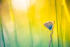 Beautiful nature close-up, summer flowers and butterfly under sunlight. Calm nature background Royalty Free Stock Photography