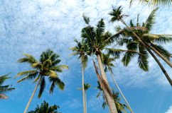 beautiful nature, coconut tree at tropical beach,cloudy blue sky Stock Photo