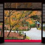 Beautiful nature colourful tree leaves in Japanese zen garden. In autumn season at Kyoto,Japan Stock Photo