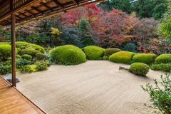 Beautiful nature colourful tree leaves in Japanese zen garden. In autumn season at Kyoto,Japan Royalty Free Stock Photo
