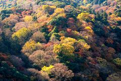 Colourful tree leaves on mountain at Arashiyama,Kyoto. Beautiful nature colourful tree leaves on mountain at Arashiyama in autumn season in Kyoto, Japan Royalty Free Stock Photos