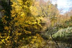 Beautiful nature Stock Images