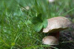 Beautiful nature. Beautiful details of nature Stock Photography