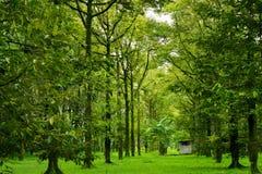 Beautiful nature always Royalty Free Stock Image