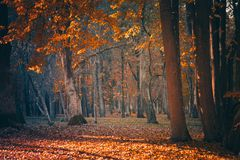 Beautiful Nature Fall landscape Park on Sunny autumn day. Beautiful Nature Fall landscape, selective focus. Picturesque view of the autumn forest. Old Park in royalty free stock image