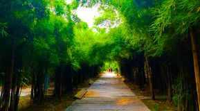 Beautiful nature and forest bamboo and tree tunnel road at public parks