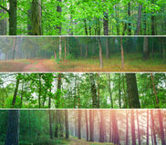 Beautiful nature, four different panoramas of forest. Stock Photography