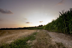 Beautiful nature - golden wheat and green corn field edge. Beautiful nature - golden mown wheat field and green corn field edge with country road running between Stock Images