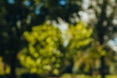Beautiful nature, green background, blurred around bokeh stock images