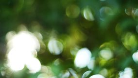 Beautiful nature green bokeh sunshine abstract blurred background, foliage plant leaves shadow swaying in the wind with sunbeam stock video