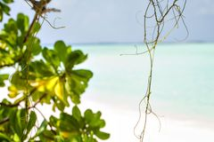 Beautiful nature green mangrove leaves on tropical beach with sun light wave abstract background Royalty Free Stock Photography