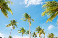 Beautiful nature green palm leaf over blue sky Stock Photo