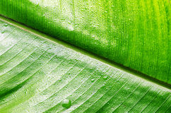 Green wet leaf close up Royalty Free Stock Images