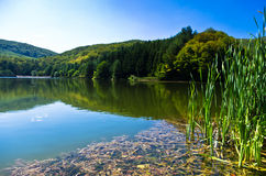 Beautiful nature and greenery at the lake in Semenic national park, Banat region Stock Photos